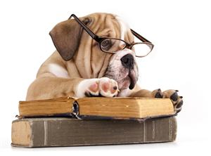 readingbulldog
