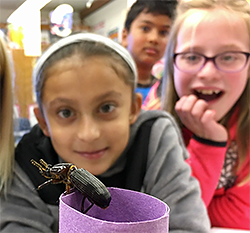 Bug experiment at Buck Elementary