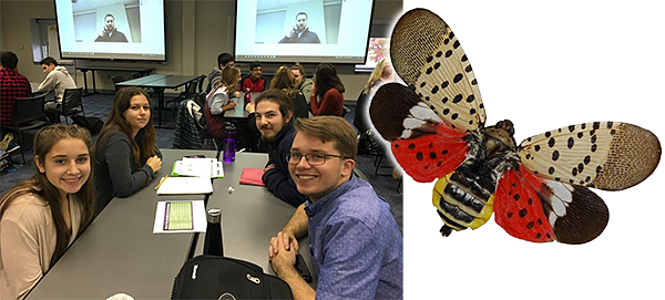 Student programmers and lanternfly