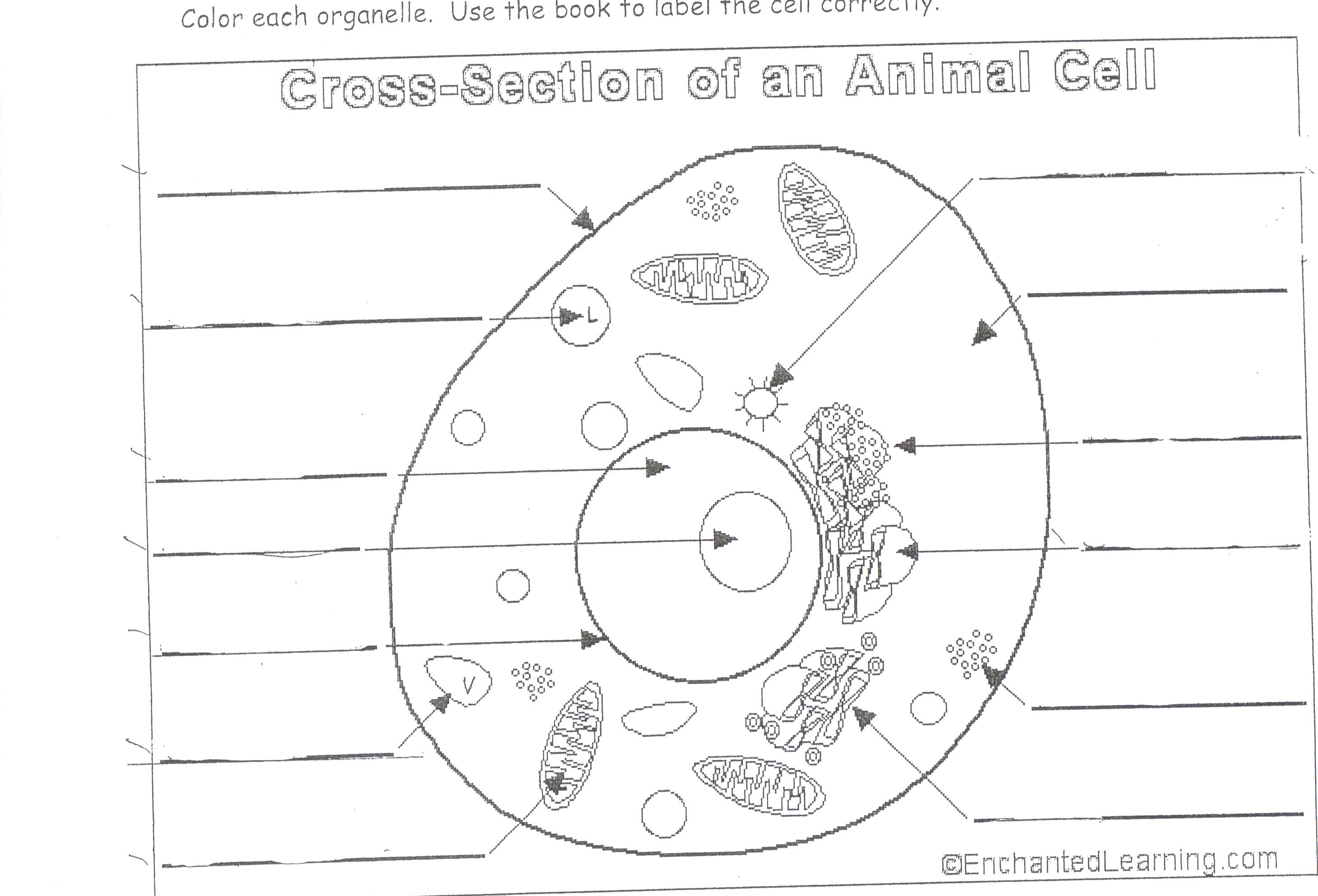 Plant Cell Diagram 7th Grade Animal and plant cells diagram